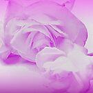 Rose Tango - Language of Love by Ann  Warrenton