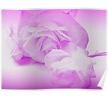Rose Tango - Language of Love Poster