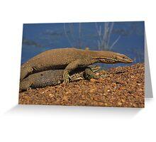 Goanna's mating at Fogg Dam, Northern Territory Greeting Card