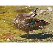 DUCK YOGA #2 Photographic Print