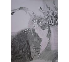 A Cat's Muse Photographic Print