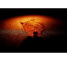 Golden Shadows Photographic Print
