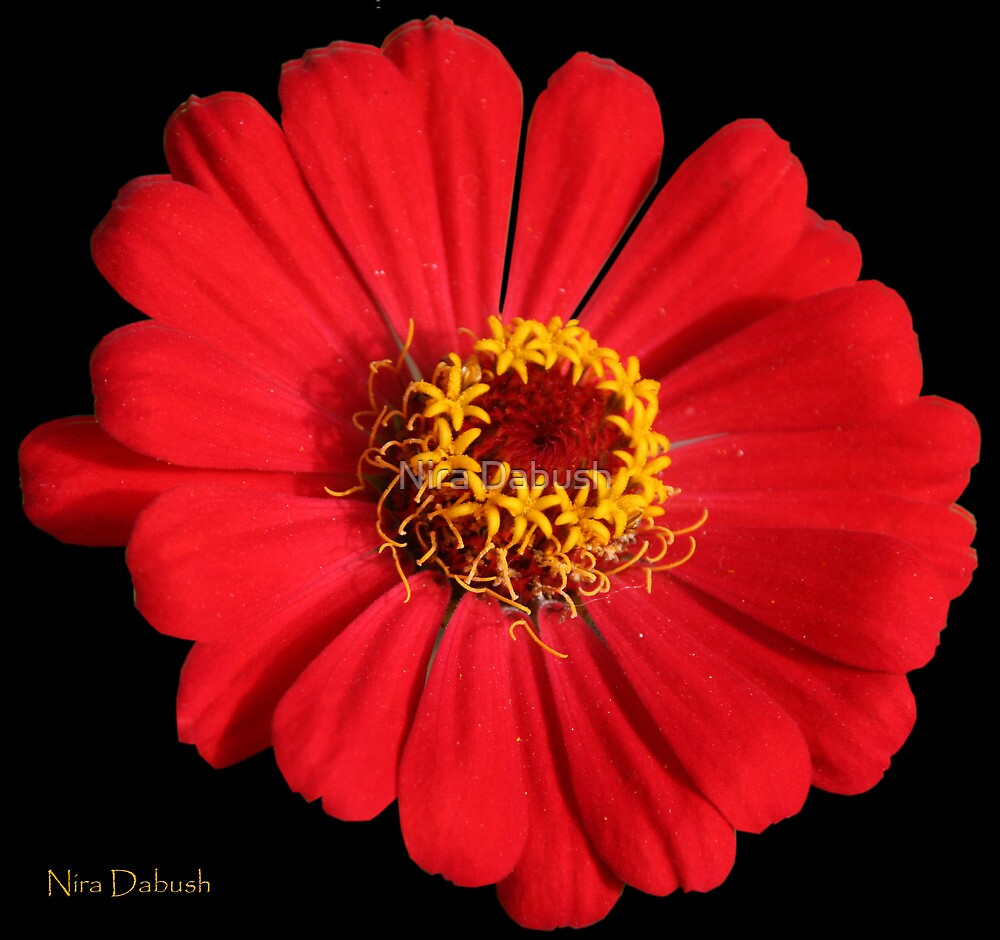 Lady in Red by Nira Dabush