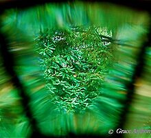 Through the Looking Glass by GraceNotes