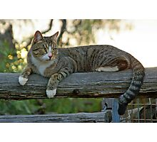 FARM CAT Photographic Print