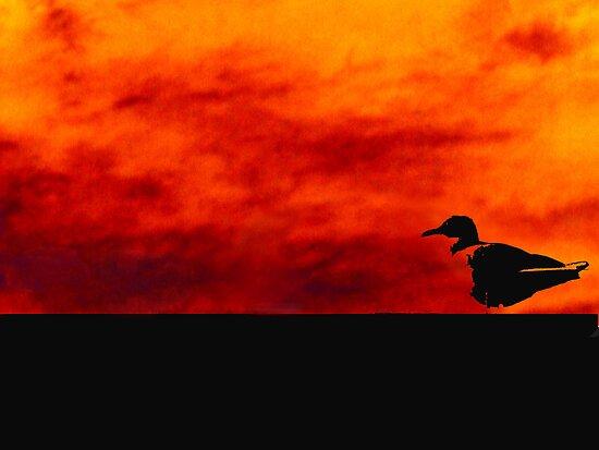 Doomed Seagull by Joshua  Draffin