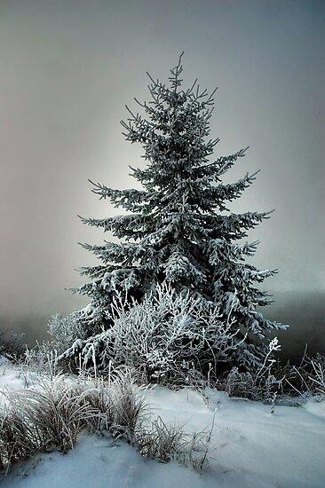 Majestic Winter by Heather  Waller-Rivet  IPA