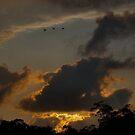 Tamarindo, Costa Rica - Ibis flying by citrineblue