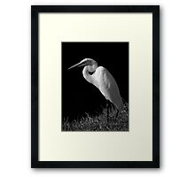 Avian Beauty ~ Part Five Framed Print