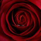 The Rose Droplet by StuartGLoch