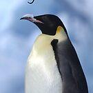 Emperor Penguin 3 - Merry Christmas Card by Steve Bulford
