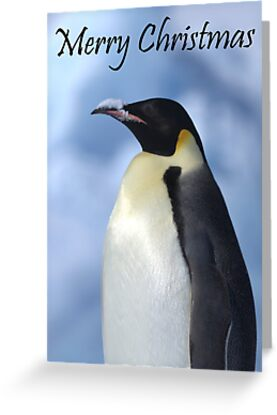 Emperor Penguin 3 - Merry Christmas Card by Steve Bulford