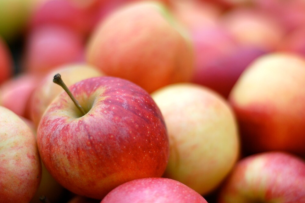 Apples - Union Square Farmer's Market by Angela Rutherford