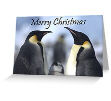 Emperor Penguins 4 - Merry Christmas Card Greeting Card