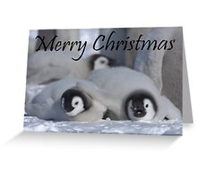 Emperor Penguins 5 - Merry Christmas Card Greeting Card
