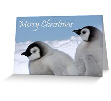 Emperor Penguins 6 - Merry Christmas Card Greeting Card