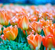 Orange Garden - Tulips in City Hall Park by Angela Rutherford