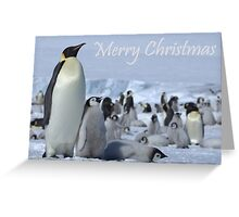 Emperor Penguins 7 - Merry Christmas Card Greeting Card
