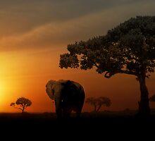 Sunset Elephant - Masai Mara by StuartGLoch