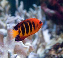 Tropical Fish - Sea Life Munich by Melanie PATRICK
