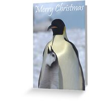 Emperor Penguins 10 - Merry Christmas Card Greeting Card