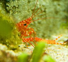 Crayfish - Sea Life Munich by Melanie PATRICK