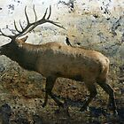 Elk by ARTIST4HIRE