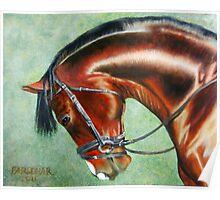 Aparee, Trakehner Stallion Poster