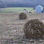 This Month Hay Bales Next Month Snowballs by clizzio
