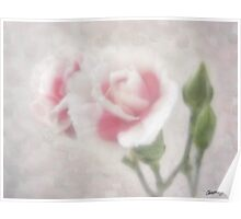 Pink Centered Carnations 3 - Remembrance Poster