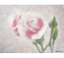 Pink Centered Carnations 3 - Remembrance Photographic Print