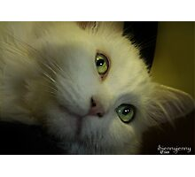 A Cat In Every Space  Photographic Print