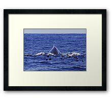 Humpback Sea Monster :: Eden Framed Print