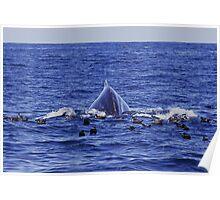 Humpback Sea Monster :: Eden Poster