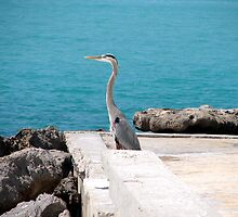 Great Blue Heron by Lorraine Armstrong