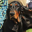 Coonhound by saluqilady