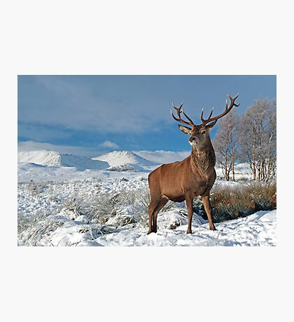 Deer-Stag Photographic Print