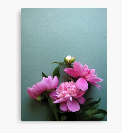 pink peony blooms on green background Canvas Print