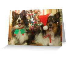 Sheltie Christmas Greeting Card