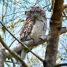 Tawny Frogmouth by byronbackyard