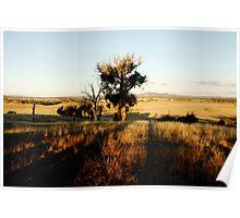 Beauty of Bushland Poster