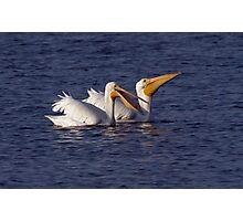 White Pelicans Photographic Print