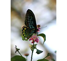 Butterfly image Photographic Print