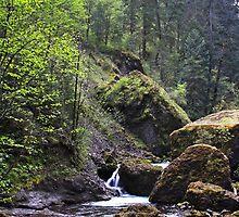 Wahclella Falls by Julia Washburn
