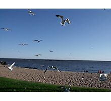 Coming in for food... Silly Seagulls Photographic Print
