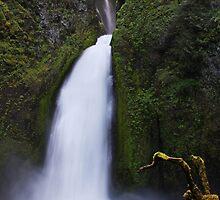 The Bug of the Wahclella Falls by Julia Washburn