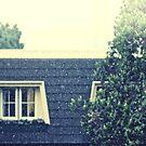 rainy afternoon by Dan Coates