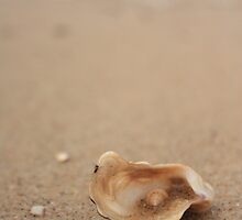 sea shells  by kellimage