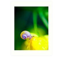 the beautiful snail Art Print