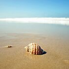 The Shell by Jodie Doyle